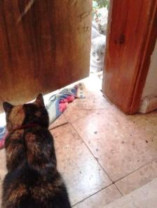 Forget it. I'm just as stubborn as you are. Sooner or later Heila will open the door and then you'll run...