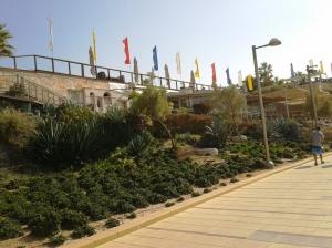 Yam Sheva7